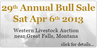 2013 Annual Bull Sale, April 6th