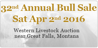 2015 bull sale is on 4th April