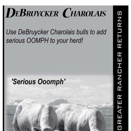 Charolais adds Oomph to your Herd
